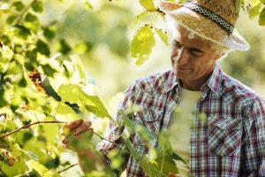 3.2.1 Projetos de Investimento: Vinha e Cereais (incluí arroz)