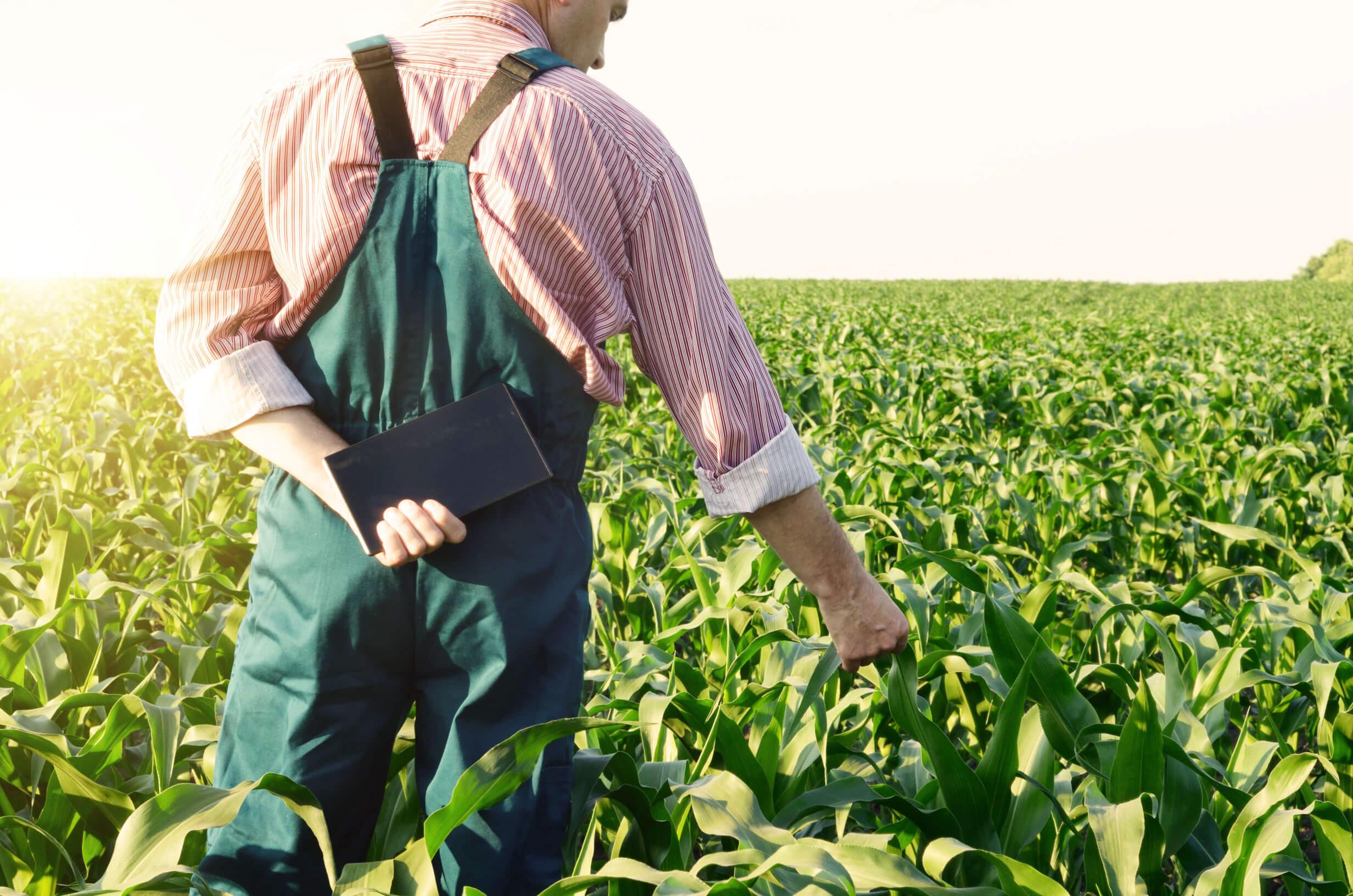 Debate: Apoio Técnico à Instalação de Novos Empresários no Setor Agrícola