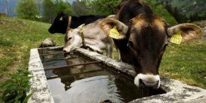 SECA: Pequenos Investimentos na Exploração Agrícola – NOVOS CONCELHOS